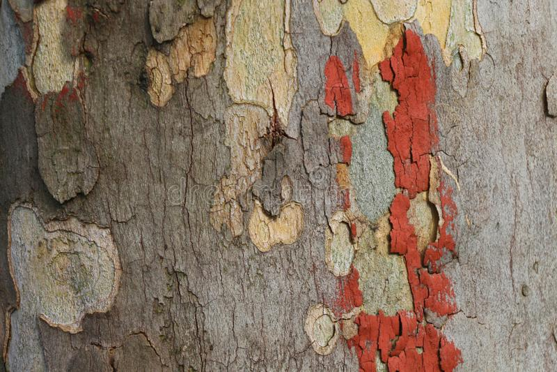 Écorce d'arbre grunge avec la peinture orange photo libre de droits