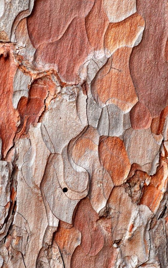 Écorce d'arbre peu commune image stock