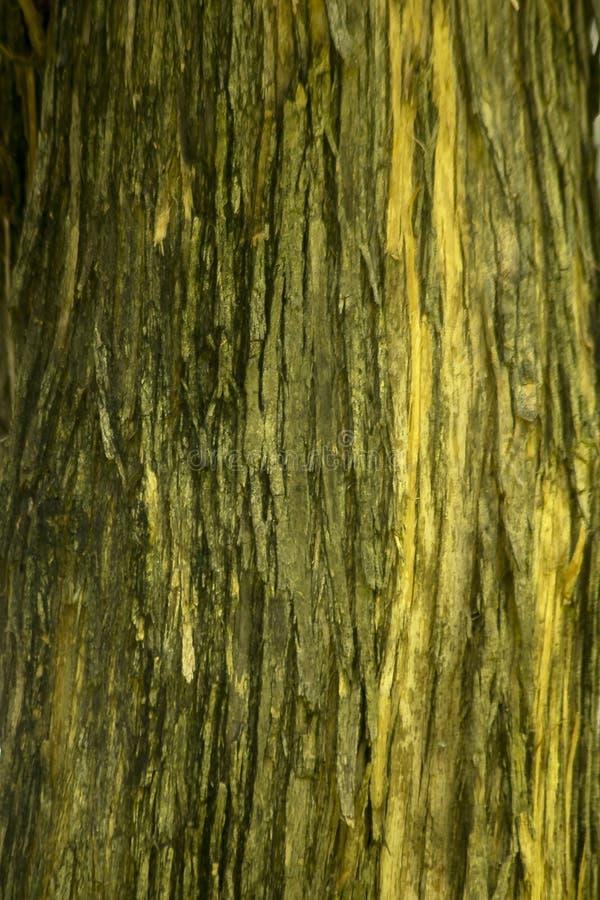Écorce d'arbre sèche sur le tronc photographie stock
