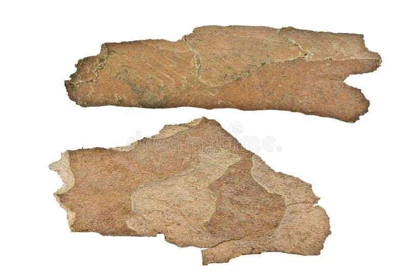 écorce d'Avion-arbre photo libre de droits