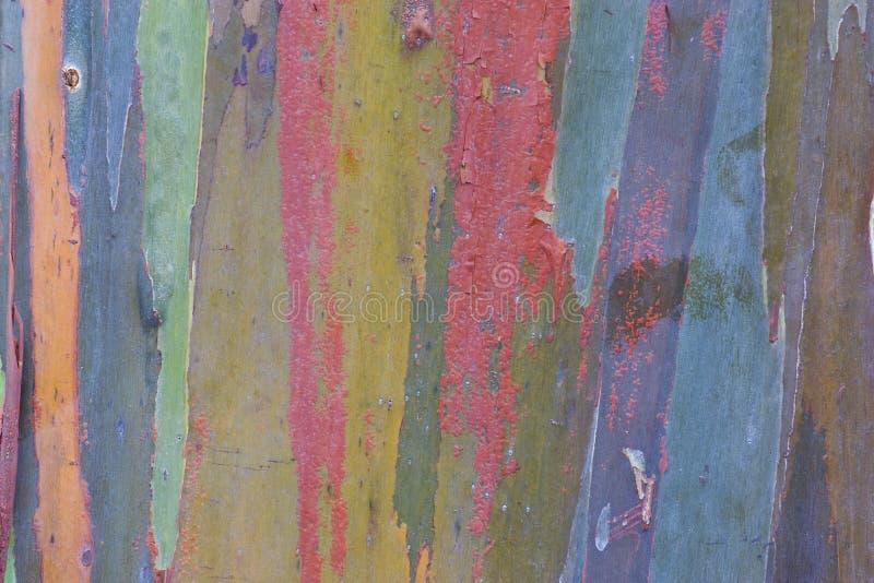 Écorce d'eucalyptus images libres de droits