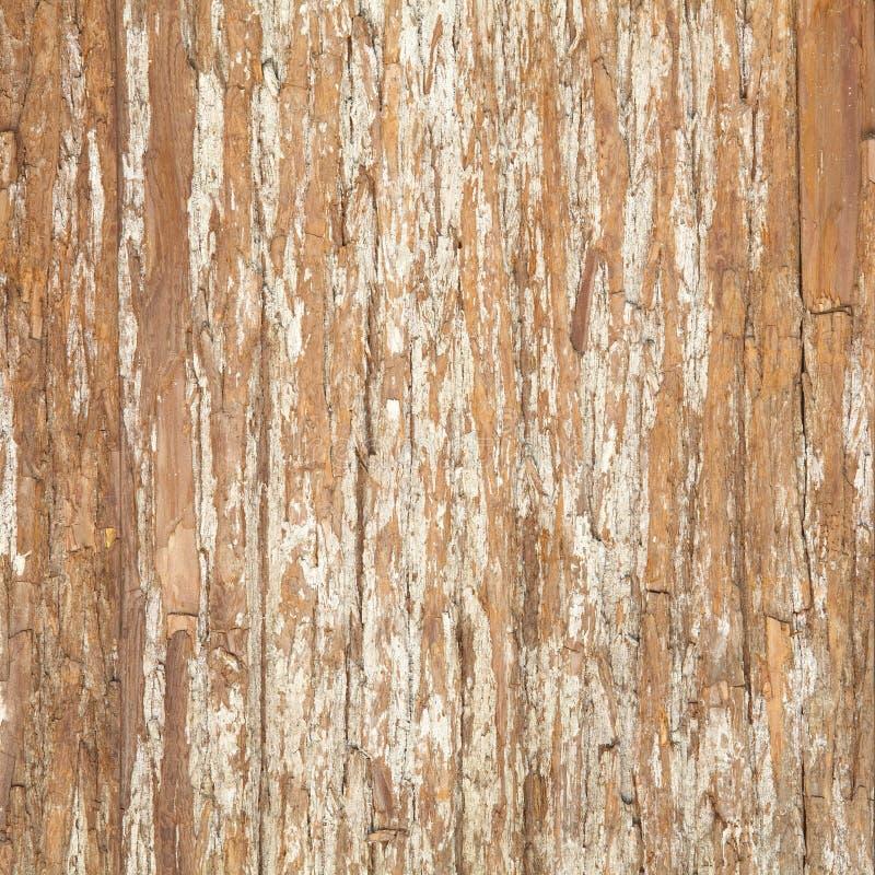 Écorce d'orme. Texture sans couture de Tileable photos stock