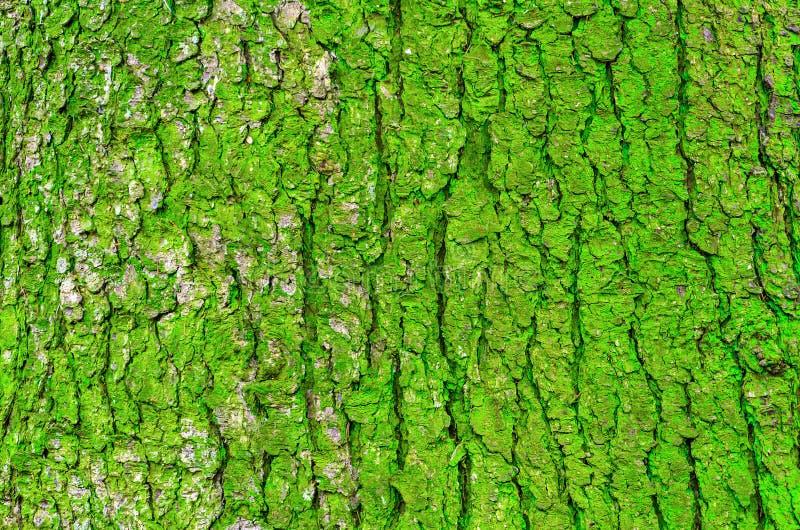 Corce d 39 un arbre et d 39 une mousse verte sur un tronc image - Mousse sur les arbres ...