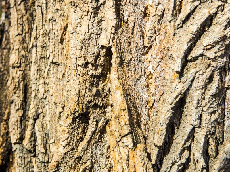 Écorce d'un fond de texture d'arbre photo libre de droits
