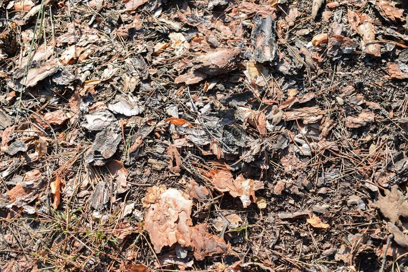 écorce dans la forêt photos libres de droits