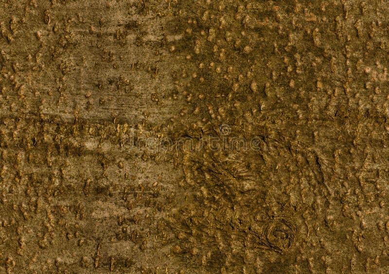 écorce de Hêtre-arbre Modèle sans couture de fond photographie stock libre de droits