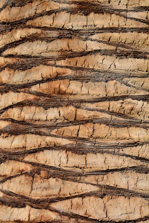 Écorce de palmier photographie stock