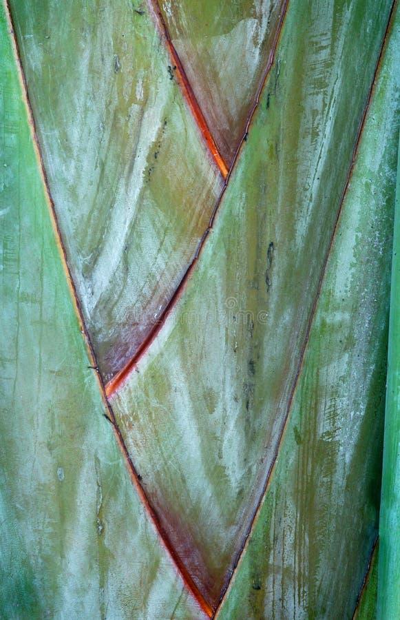 Écorce de palmier images stock