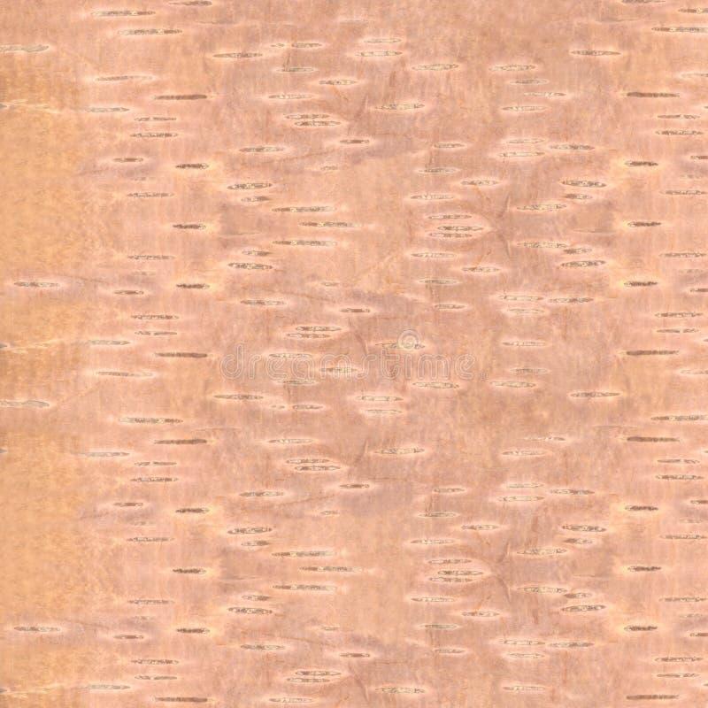 Écorce de QG de texture de bouleau illustration libre de droits