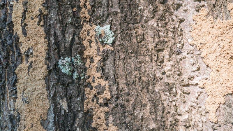 Écorce de texture d'arbre photographie stock