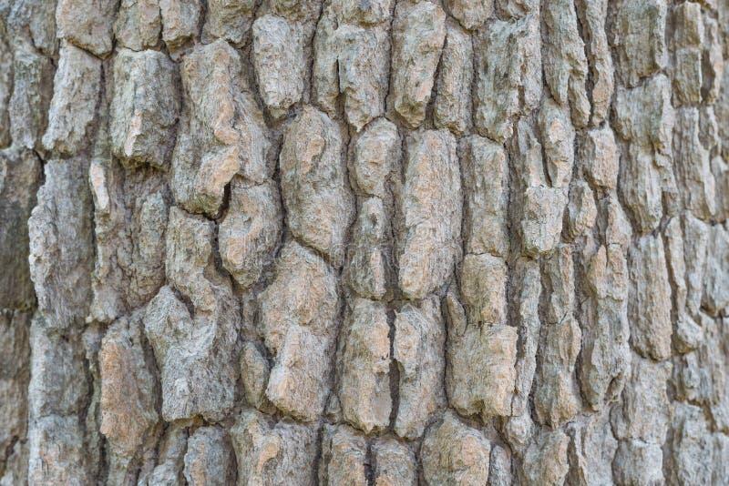 Écorce de texture d'arbre image libre de droits