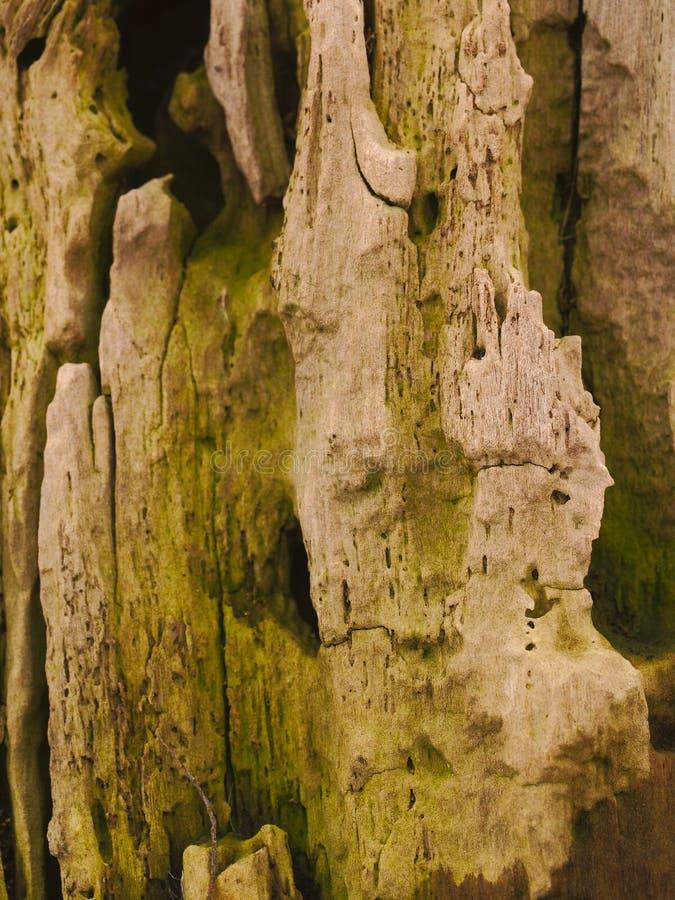 Écorce de vieil arbre images libres de droits