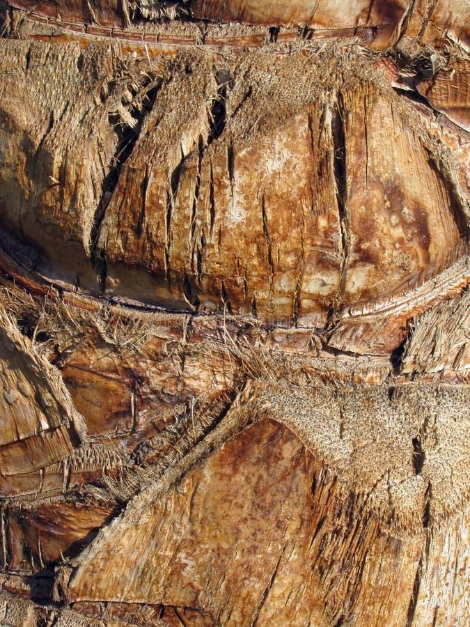Écorce du palmier photo libre de droits
