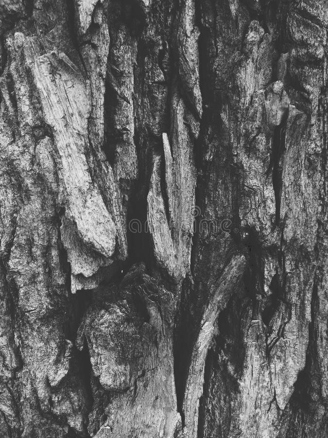 Écorce noire et blanche images libres de droits