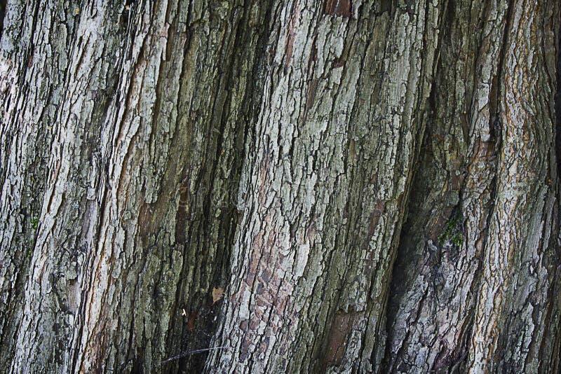Écorce rugueuse de texture photos libres de droits