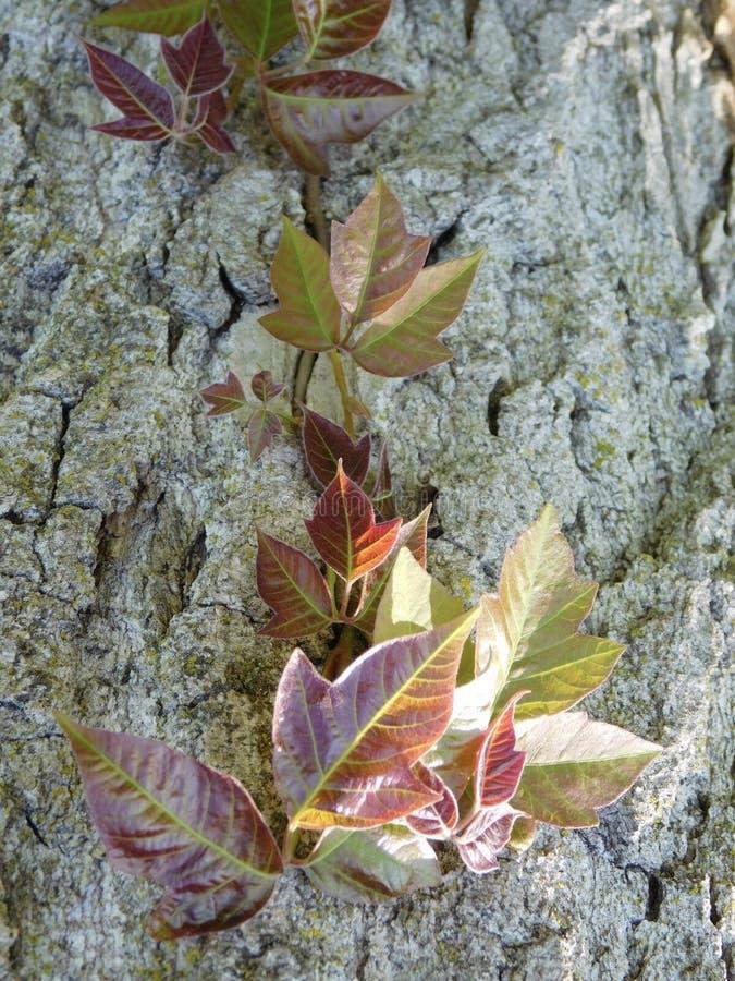 Écorcement vers le haut de l'arbre photos stock