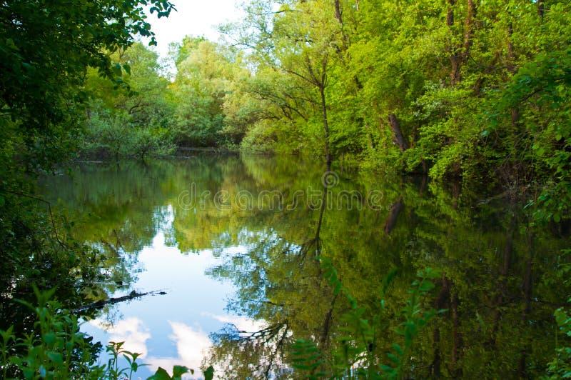 Écosystèmes d'eau stagnante de terre, de lac, de faune, d'eau, d'écosystèmes aquatiques, de cailloux, de lacs, d'étangs et de mar image libre de droits