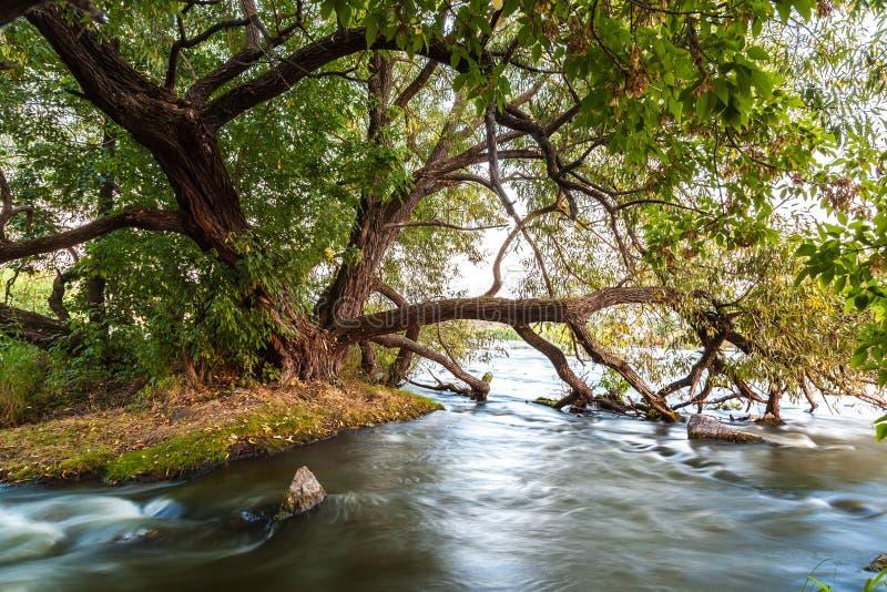Écoulement de rivière dans les roches près du grand arbre vert photo stock