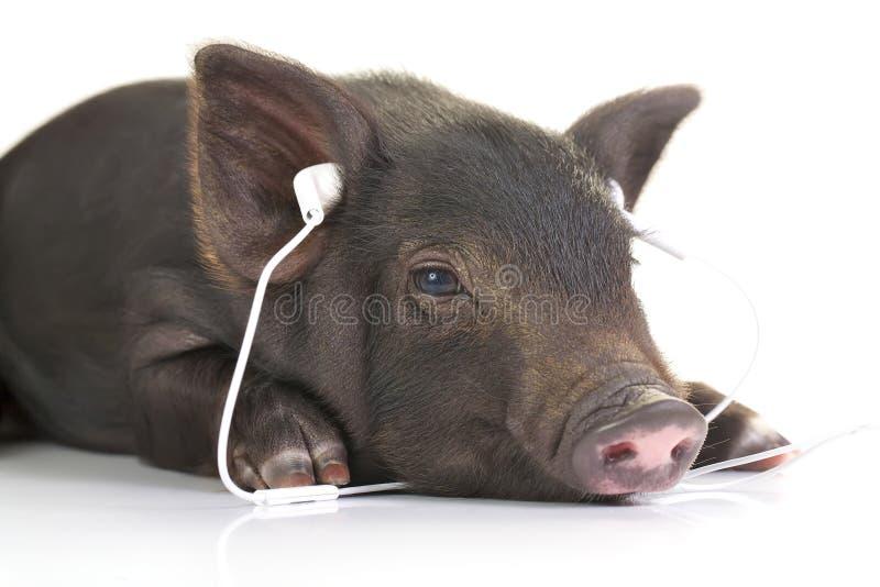 Écoute d'Eazy photographie stock libre de droits