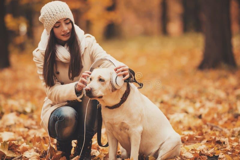 Écouteurs sur Labrador photo stock