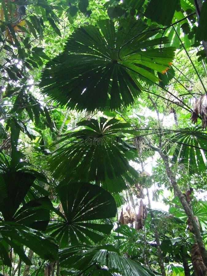 Écran de forêt humide photographie stock libre de droits