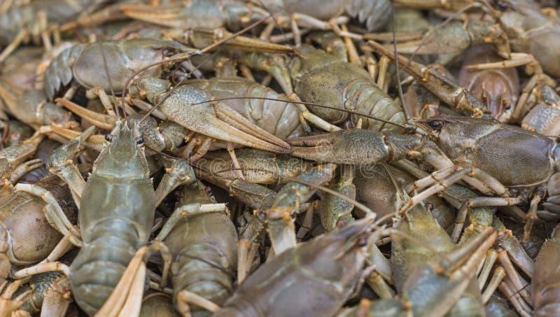 Download Écrevisses Cancer Crabes Cuits Pour La Nourriture Image stock - Image du sain, cuit: 76085433