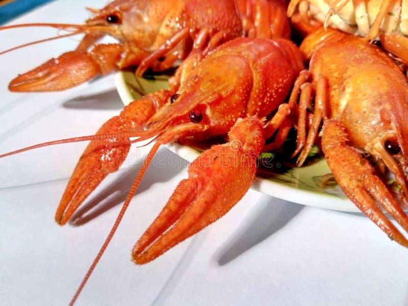 Écrevisses de rivière de crustacés, homard, crevette, homard Casse-croûte et délicatesse photo libre de droits
