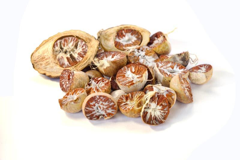 Écrou de noix de bétel ou d'arec image stock