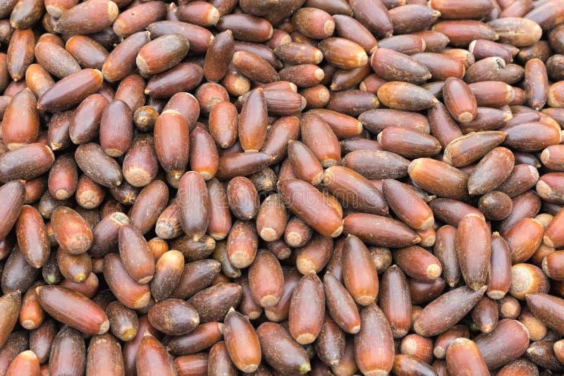 Écrous d'argan sur un marché au Maroc photos stock