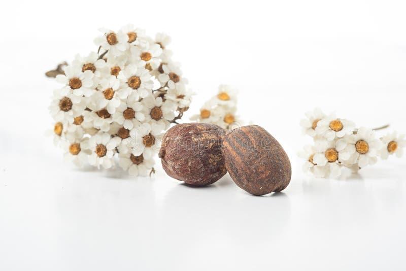 Écrous et fleurs de beurre de karité photos stock