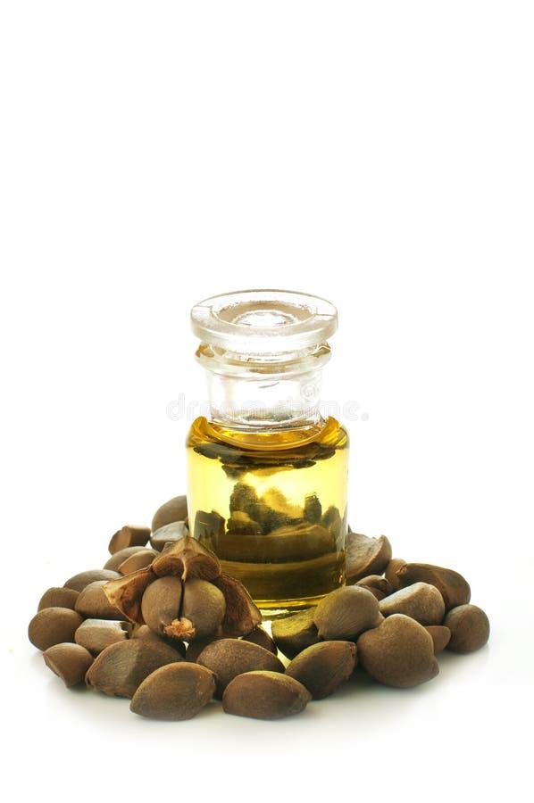 Écrous et huile de camélia image libre de droits