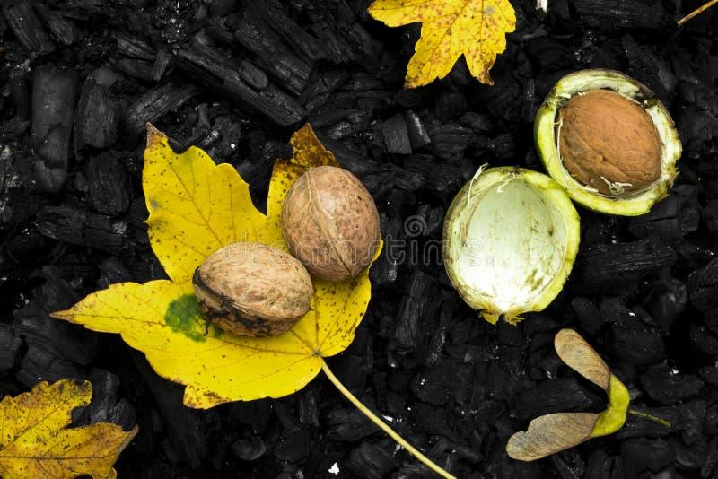 Écrous, feuilles et charbon de bois images stock