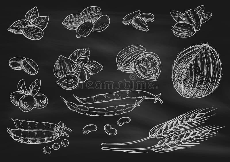 Écrous, icônes de croquis de craie de grain sur le tableau noir illustration de vecteur