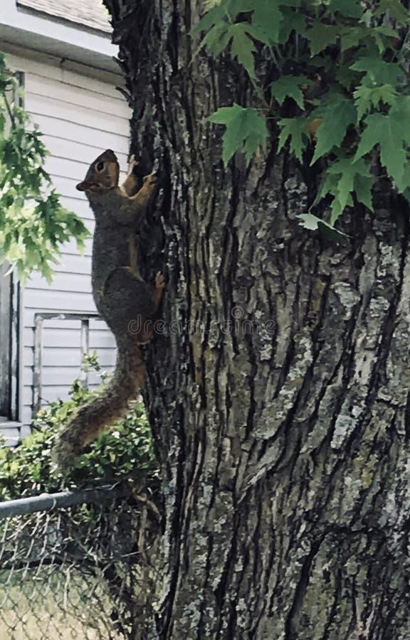 Écureuil dans l'arbre image stock