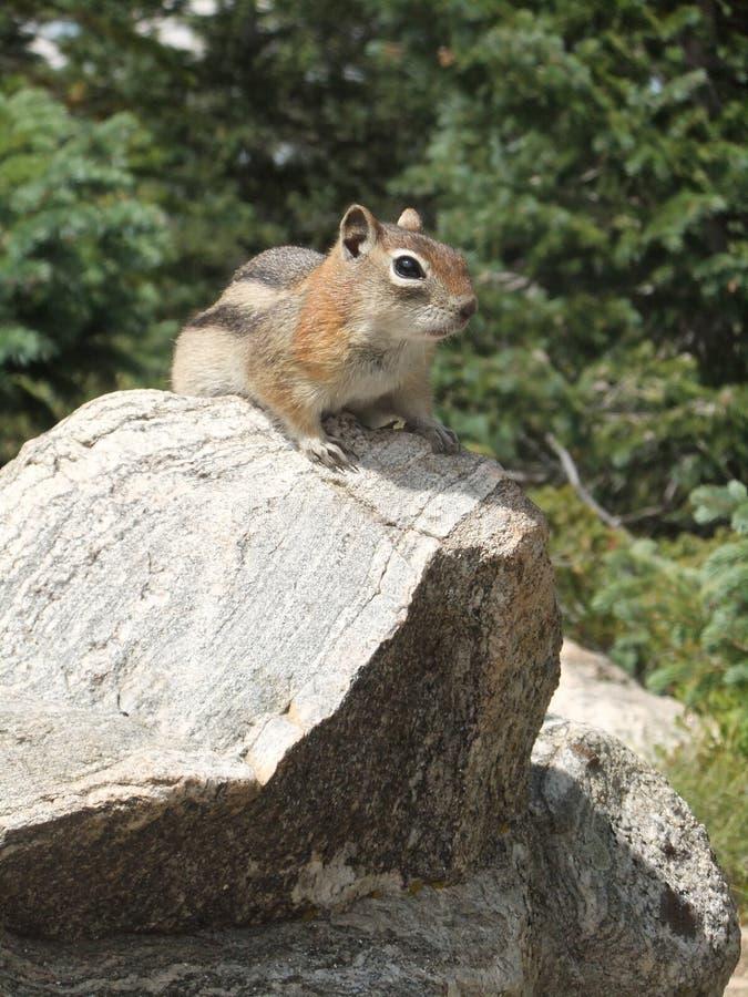 Écureuil de Santa Fe photo stock