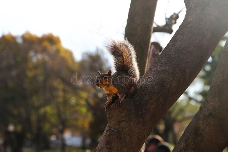 Écureuil gris dans un arbre à un parc images stock