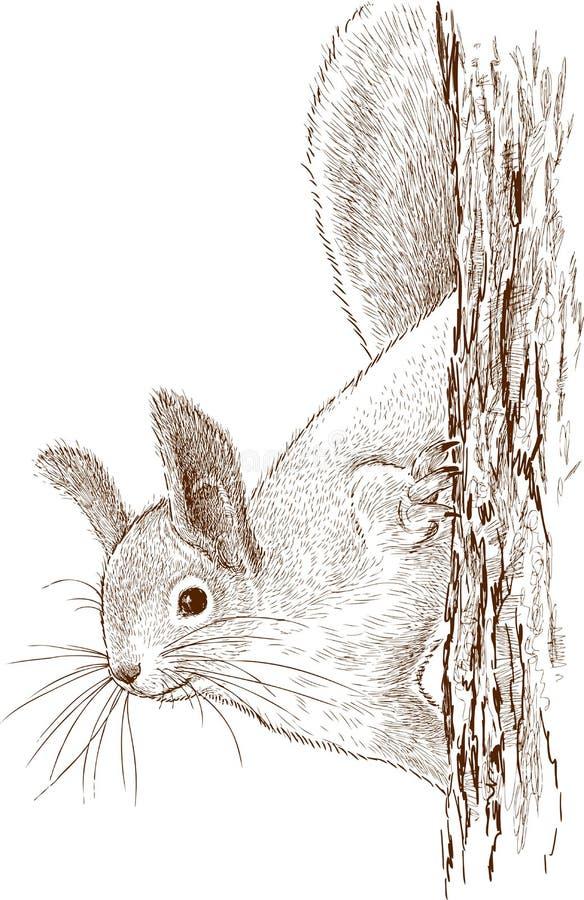 Écureuil sur un arbre illustration stock