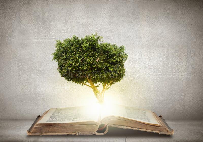 Download Éducation De Lecture Et D'individu Photo stock - Image du cache, livre: 56479736
