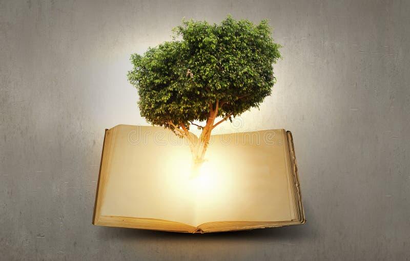 Download Éducation De Lecture Et D'individu Illustration Stock - Illustration du sagesse, livre: 56479957