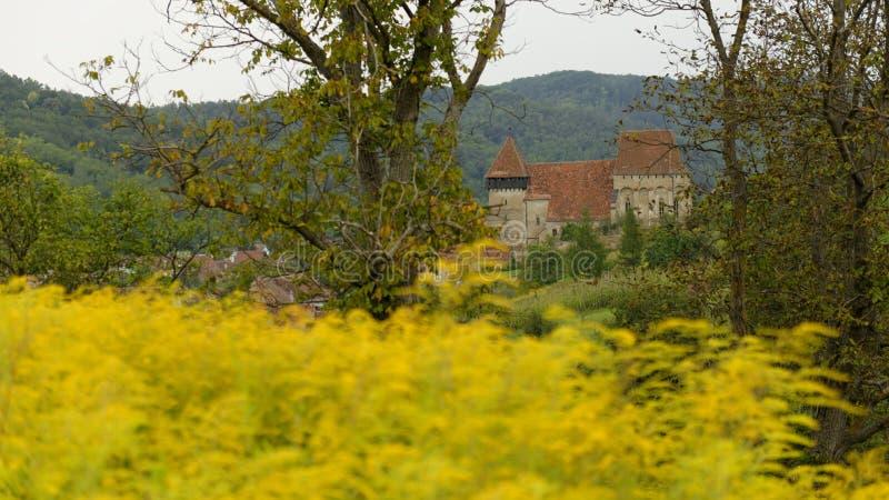 Égua de Copsa, a Transilvânia, Romênia imagens de stock royalty free
