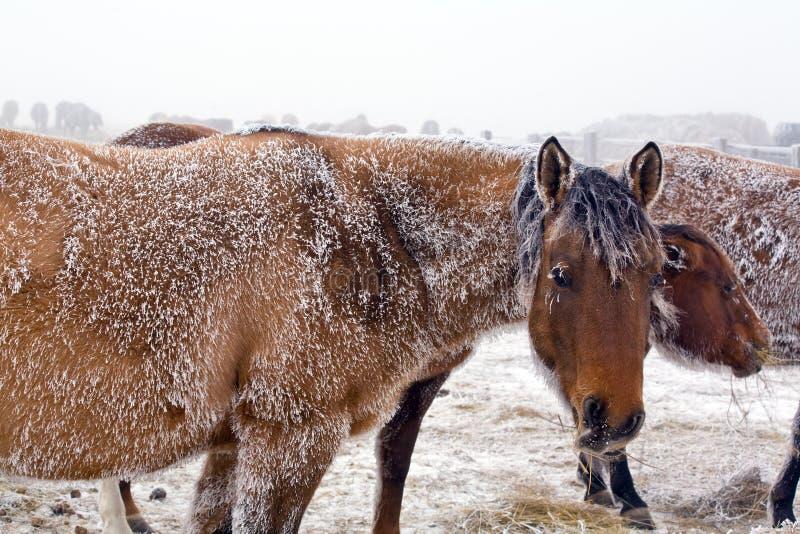 Égua no inverno imagem de stock royalty free