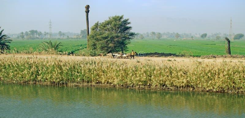 Égypte Oasis à côté du Nil photographie stock libre de droits
