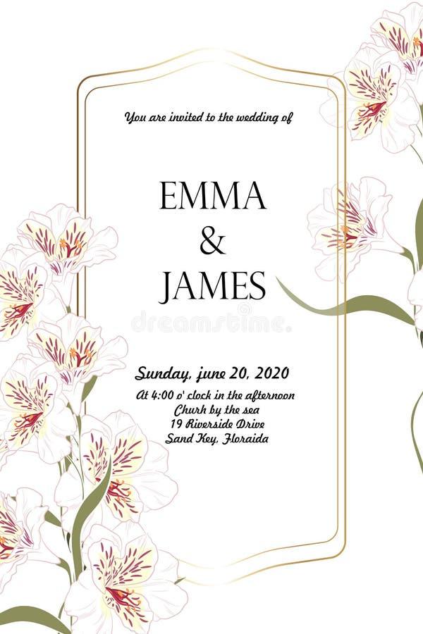 Élégants floraux invitent la conception de cadre d'or de carte : alstroemeria blanc de fleur de jardin, verdure tendre Peut être  illustration libre de droits