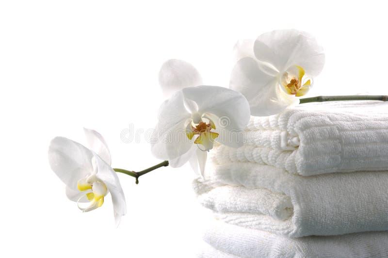 Download élément de bain image stock. Image du féminité, alternative - 8671517