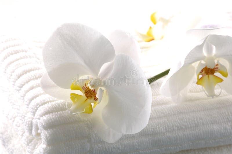 Download élément de bain image stock. Image du milieux, harmonie - 8671547