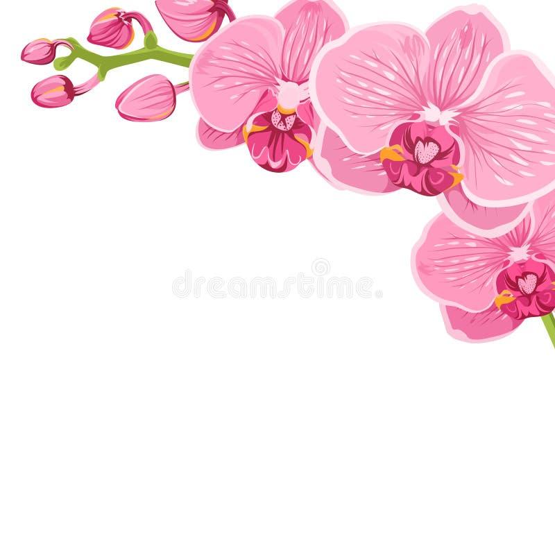 Élément de cadre de coin de fleur de phalaenopsis d'orchidée illustration libre de droits