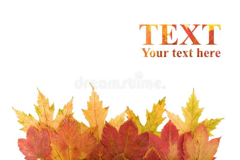 Élément de conception de lames d'automne photos stock