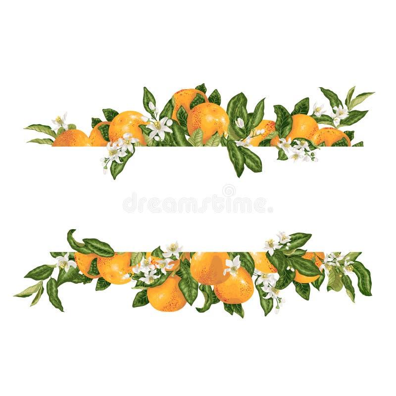 Élément decprative de vecteur de cadre de calibre avec des fleurs d'agrume et illustration libre de droits