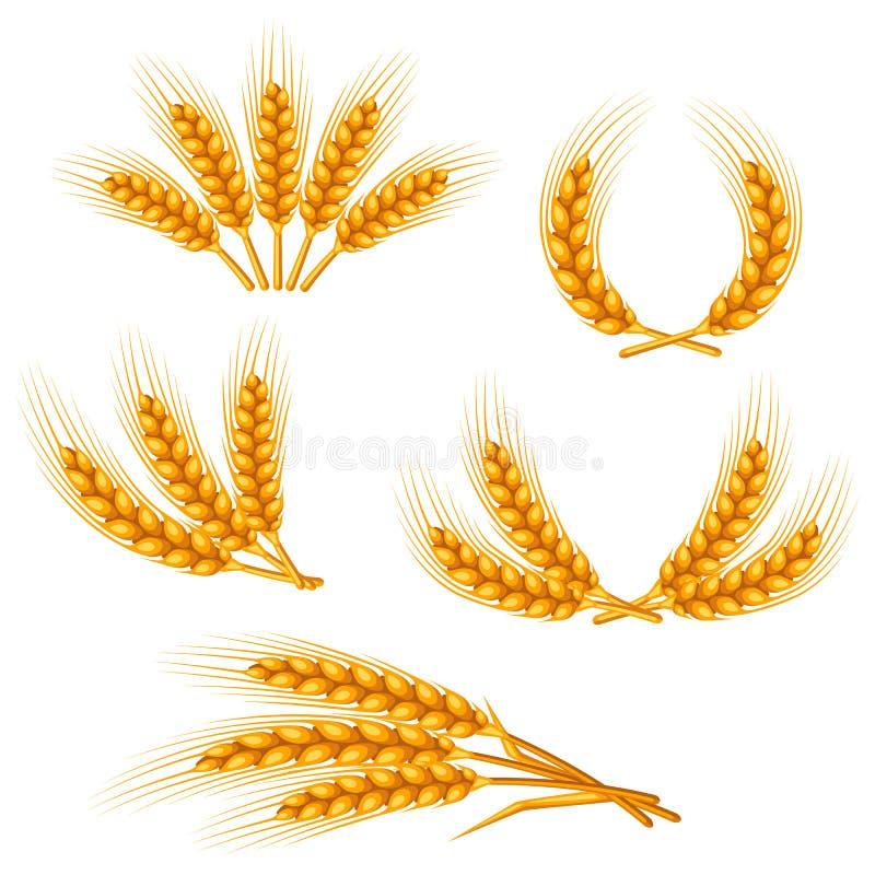 Éléments de conception avec du blé Oreilles d'or naturelles d'image agricole d'orge ou de seigle illustration stock