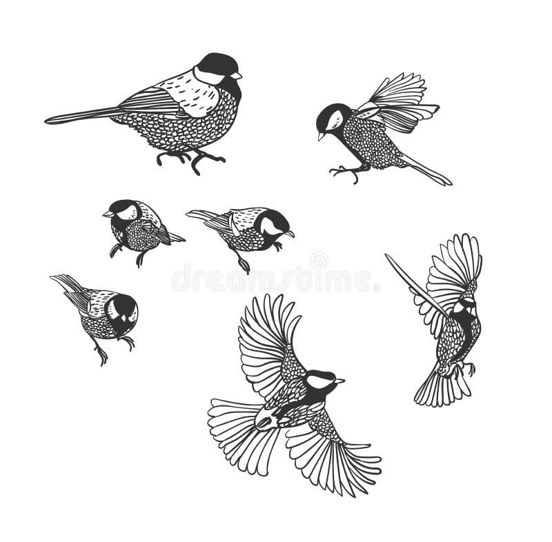 Éléments de scénographie d'oiseaux de croquis de mésange illustration stock